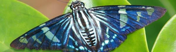 Pest Control Pest Tec Environmental 020 3488 1983